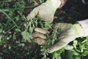 Déménager ces plantes d'intérieur à l'extérieur
